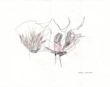 hortus Conclusus – Kerstin Müller